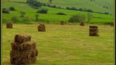 vista previa del artículo Promoción de productos alimentarios de Cantabria