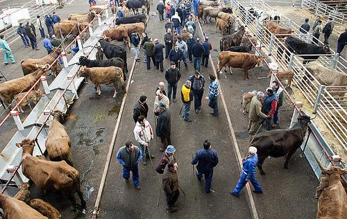 Interés en el Ferial de Torrelavega